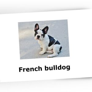 flashcards dogs
