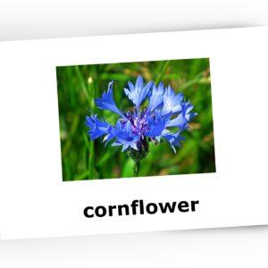 karty obrazkowe kwiaty