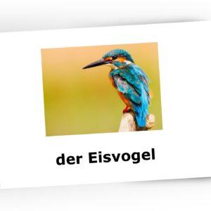 ptaki montessori karty trójdzielne