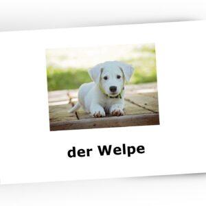 karty obrazkowe pets