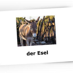 karty obrazkowe bildkarten dla dzieci